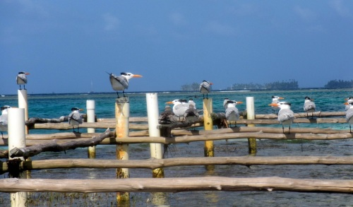 Local inhabitants of Green Island