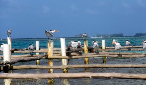 Local inhabitants of Green Island