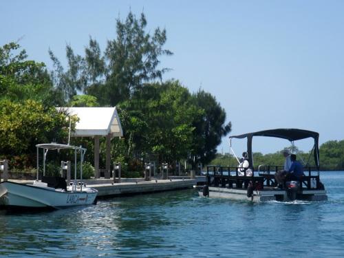 The Mini Ferry