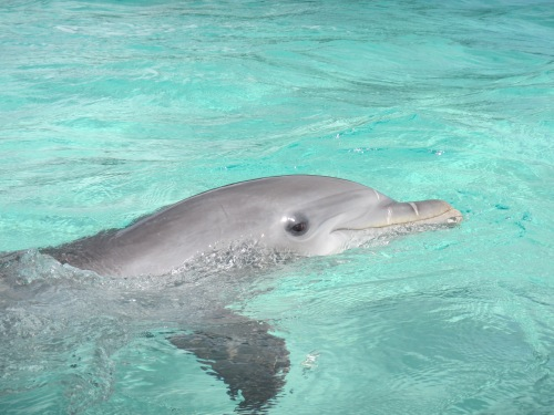 Meet Dixon, our Dolphin Guide.