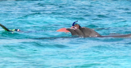 Tom trying to blend in with the family of dolphins…