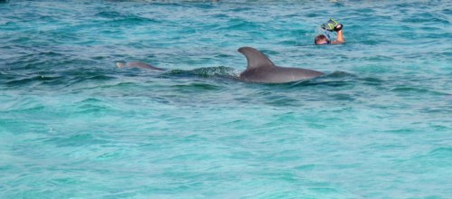 Baby Dolphin to the left, Mama to the right and Tom trying to keep up…