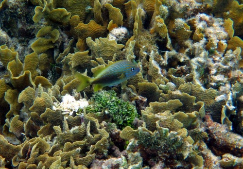 I'm still happy to see beauty, even if only at snorkeling depth!